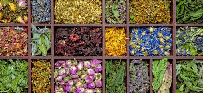I medicinali botanici con le più forti proprietà antibiotiche