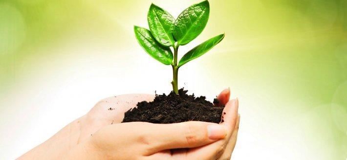 Curare le piante con 7 rimedi fai da te