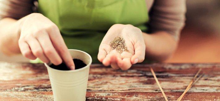 Sementi Biologiche: i vantaggi dell'orto ecologico