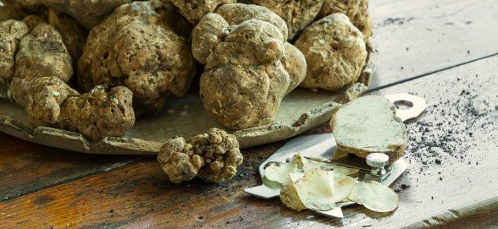 Il Tartufo: Un fungo pregiato proveniente dal sottosuolo