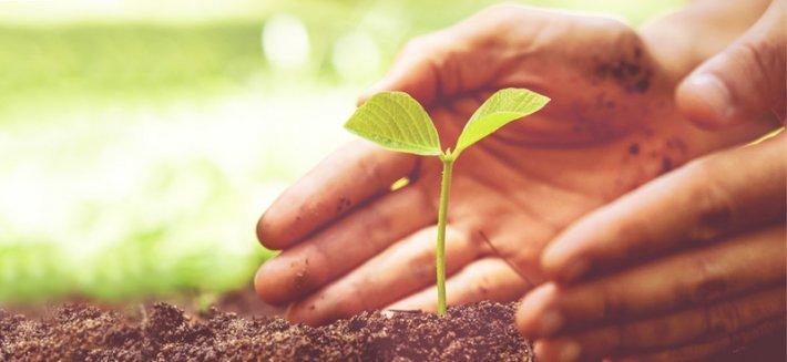 5 fertilizzanti completamente ecologici e naturali