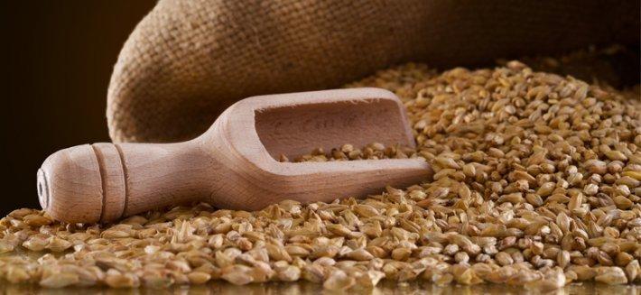 Timilia: un antico grano italiano