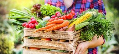 Verdura di Stagione: Proprietà, Benefici e Calendario Mese per Mese