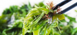 Alghe: Proprietà nutritive e benefici per la salute