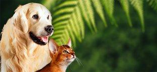Scegli Alimenti Biologici per i tuoi Animali da compagnia