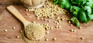 Coriandolo: usi, proprietà e tradizioni legate a questa fantastica erba aromatica.