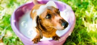 Prodotti per la pulizia di cani e gatti: per una toilette ecobio!