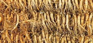 """La radice di ginseng sostiene le """"3 C"""": Cuore, Cervello, Circolazione (Parte 1 di 3)"""