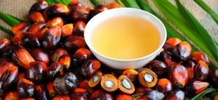 Olio di palma: tutti i dubbi e le risposte (parte 1 di 2)
