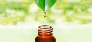 Olio essenziale di Niaouli: un balsamo per il respiro
