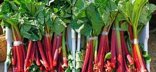 Rabarbaro: la pianta dalle tante virtù