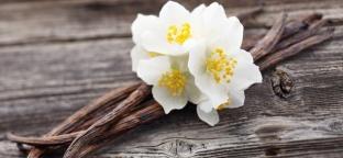 Vaniglia: varietà e benefici di un'aroma inconfondibile