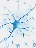Integratori Sistema Nervoso