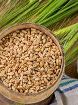 Cereali Orzo, Sorgo e Teff