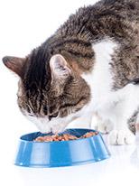 Umido per Gatti